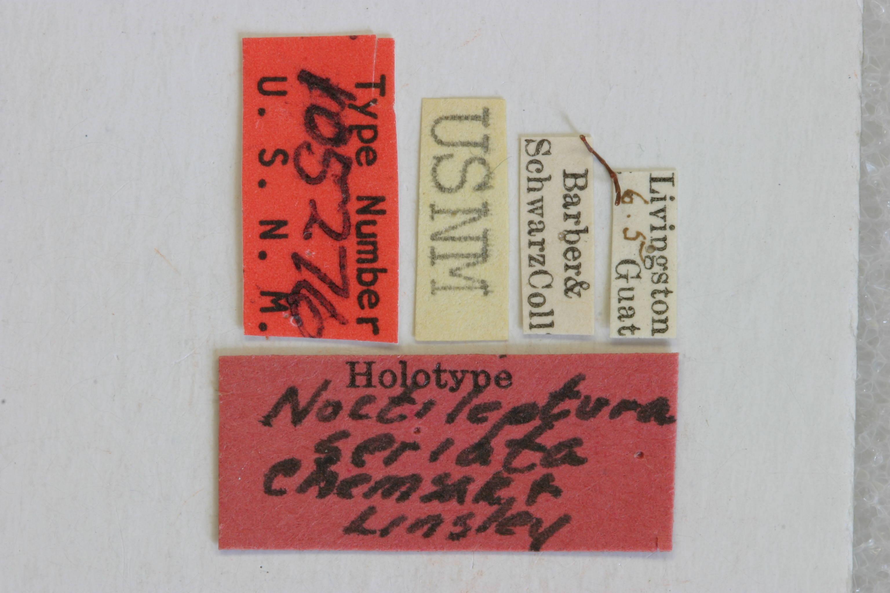 Image of <i>Noctileptura seriata</i> Chemsak & Linsley 1984