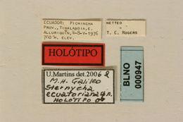 Image of <i>Sternycha ecuatoriana</i> Martins & Galileo 2007