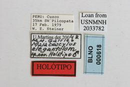 Image of <i>Malacoscylus elegantulus</i> Galileo & Martins 2005