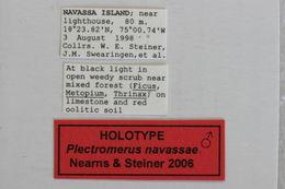 Image of <i>Plectromerus navassae</i> Nearns & Steiner 2006