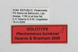 Image of <i>Plectromerus turnbowi</i> Nearns & Branham 2008