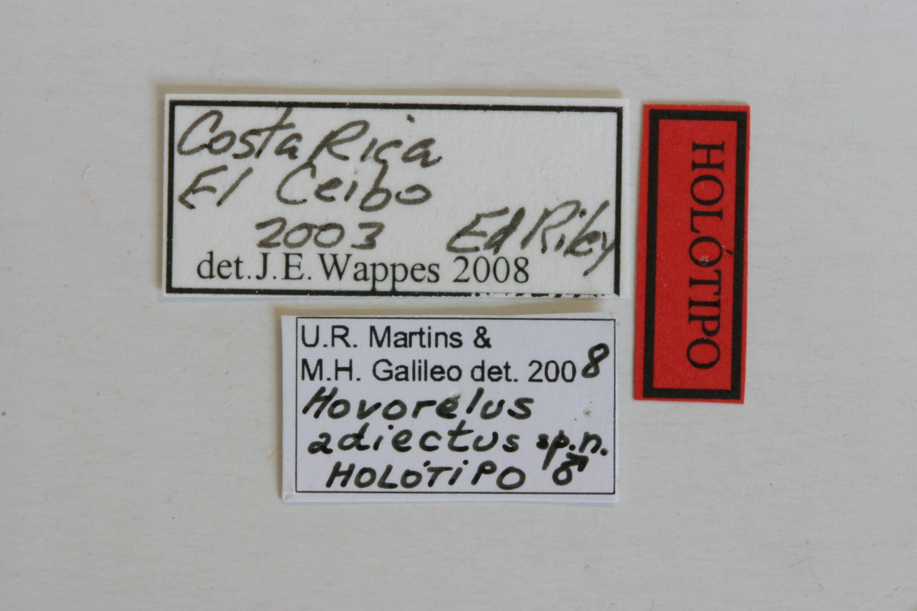 Image of <i>Hovorelus adiectus</i> Galileo & Martins 2010