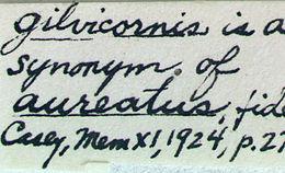 Image of <i>Stenocorus vestitus</i> (Haldeman 1847)