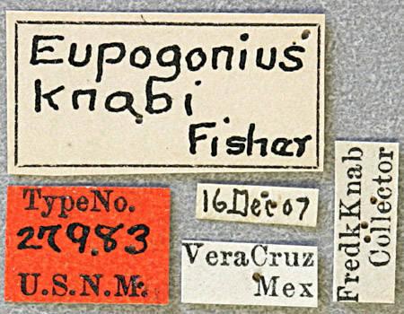 Image of <i>Eupogonius knabi</i> Fisher 1925