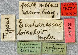 Image of <i>Eucharassus bicolor</i> Melzer 1934