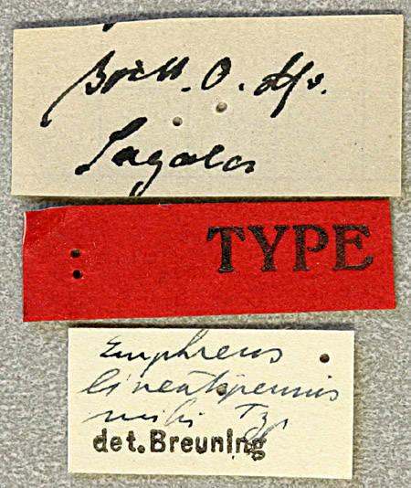 Image of <i>Emphreus lineatipennis</i> Breuning 1950