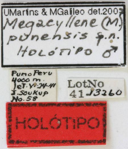 Image of <i>Megacyllene punensis</i> Martins & Galileo 2008
