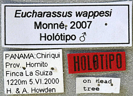 Image of <i>Eucharassus wappesi</i> Monné M. L. 2007