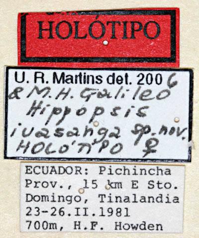 Image of <i>Hippopsis iuasanga</i> Martins & Galileo 2007
