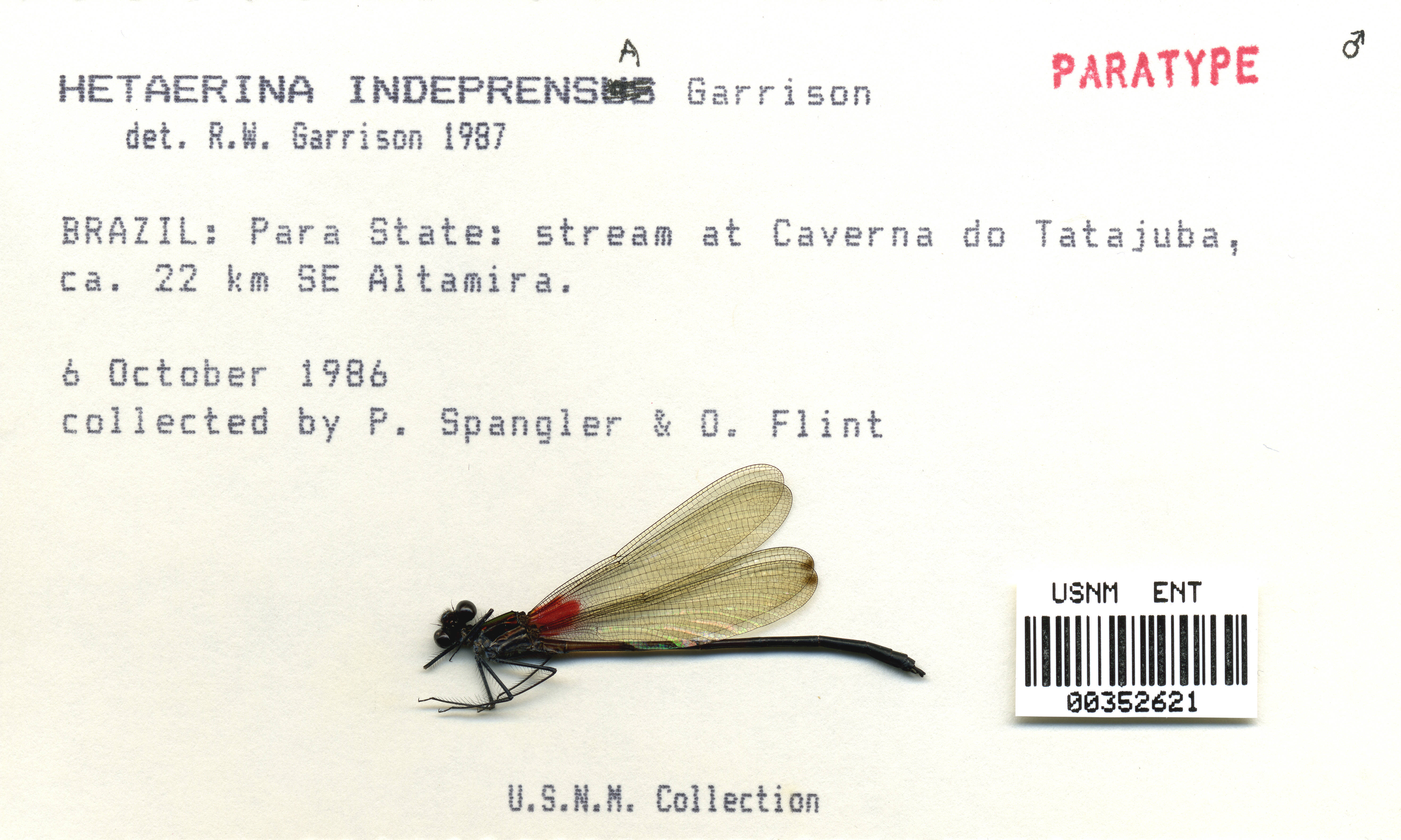 Image of <i>Hetaerina indeprensa</i> Garrison 1990