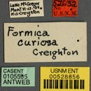 Image of <i>Formica curiosa</i> Creighton 1935