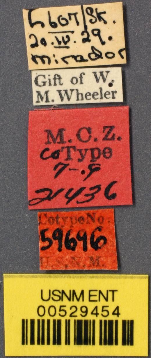 Image of <i>Brachymyrmex gagates</i> Wheeler 1934