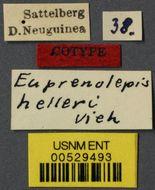 Image of <i>Prenolepis helleri</i> Viehmeyer