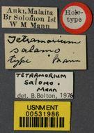 Image of <i>Tetramorium salomo</i> Mann 1919