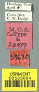 Image of <i>Acromyrmex octospinosus volcanus</i> Wheeler 1937