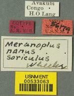 Image of <i>Meranoplus nanus</i> ssp. <i>soriculus</i> Wheeler