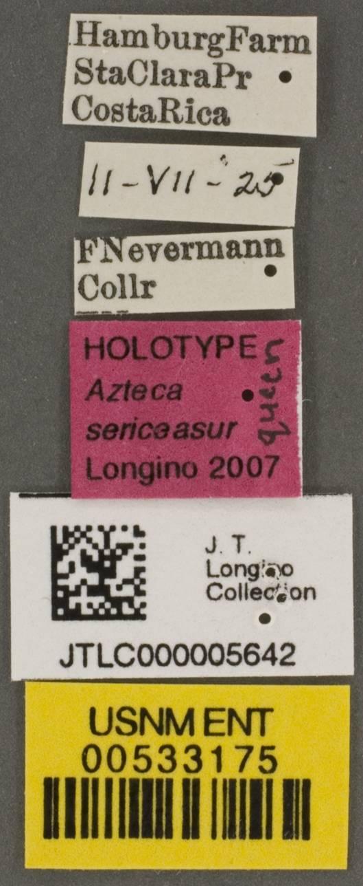 Image of <i>Azteca sericeasur</i> Longino