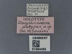 Image of <i>Dasyrhicnoessa platypes</i> Saskawa 1986