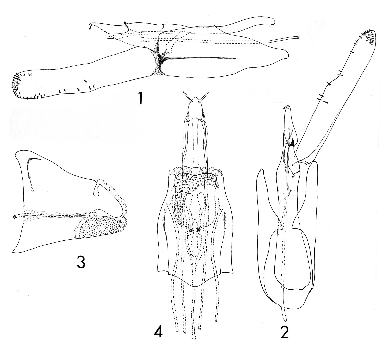 Image of <i>Ochrotrichia susanae</i> Flint & Herrmann 1976