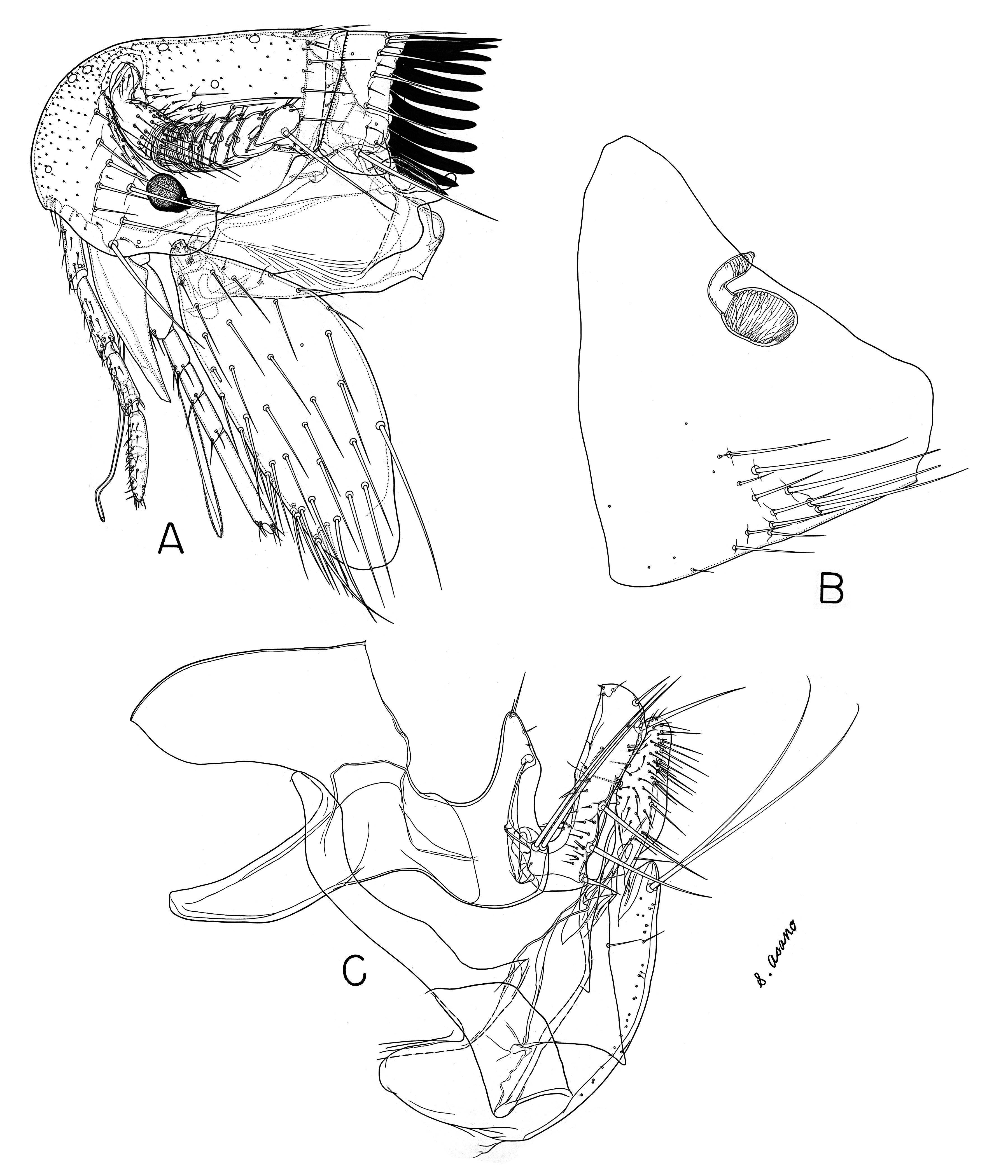 Image of <i>Tarsopsylla octodecimdentata</i> (Kolenati 1863)