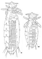 Image of <i>Hoplopleura inexpectans</i> Johnson & P. T. 1960
