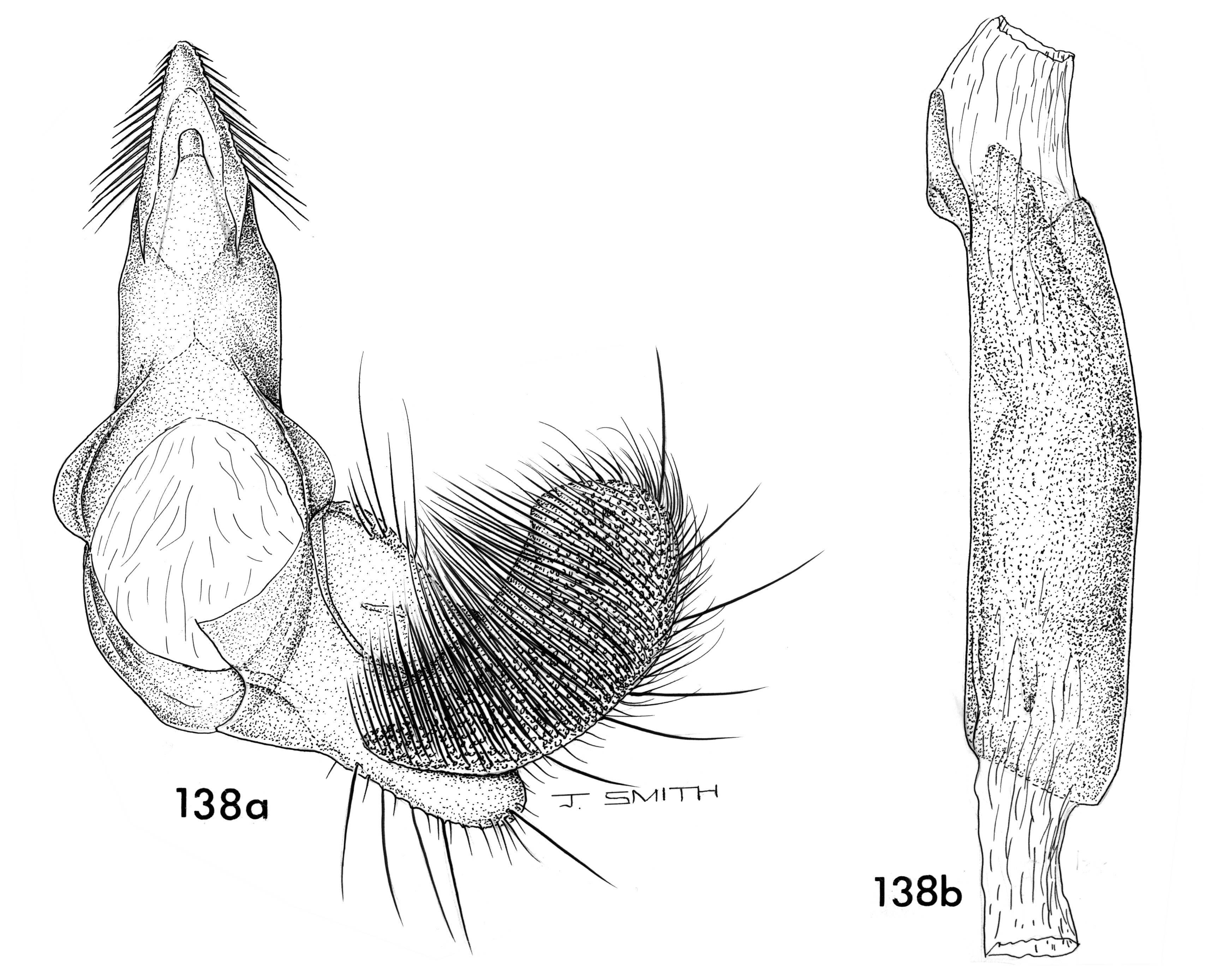 Image of <i>Stathmopoda percnophthalma</i> Clarke 1971