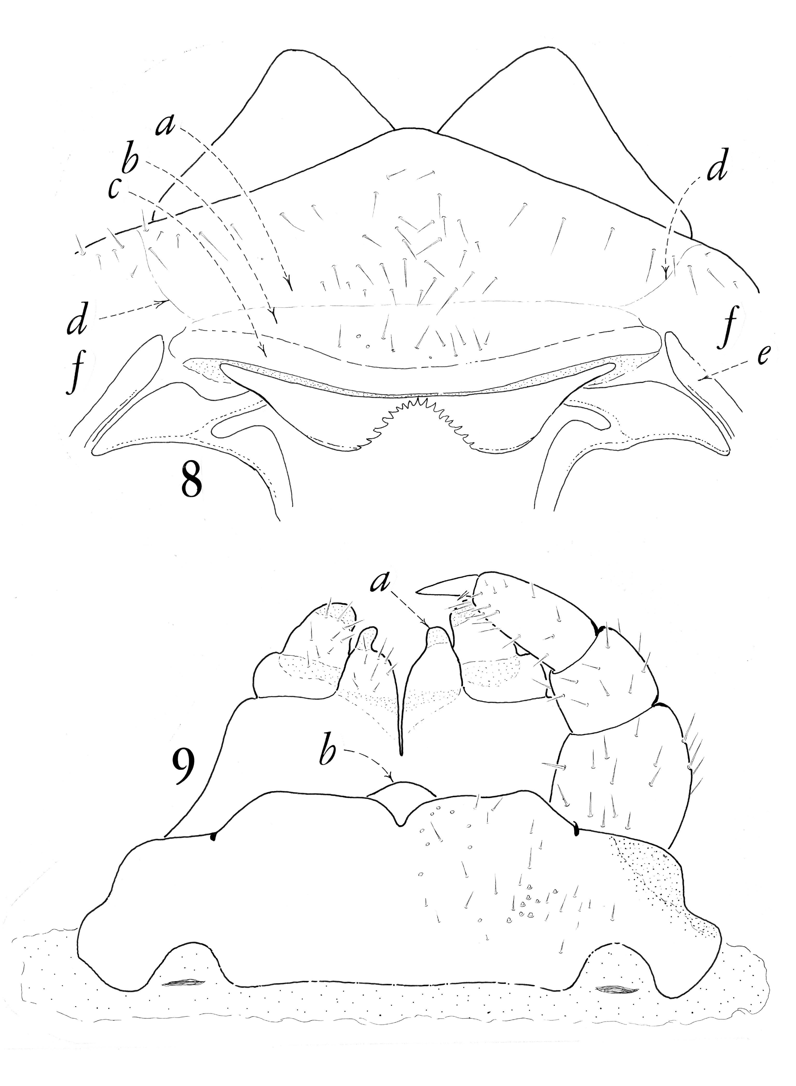 Image of Himantariidae