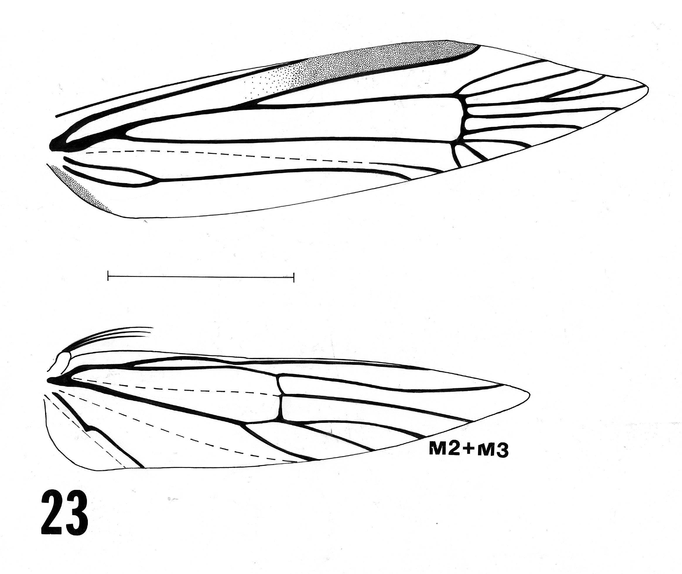 Image of <i>Blastobasis phycidella</i> Zeller 1839