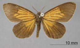 Image of <i>Eudule neorina</i> Dognin