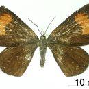 Image of <i>Mimomanes theclata</i> Dognin 1906