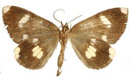 Image of <i>Erebochlora ovaliplaga</i> Dognin 1911