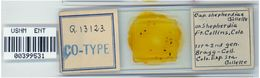 Image of <i>Capitophorus shepherdiae</i> Gillette & Bragg 1916