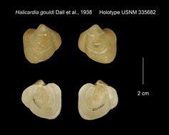 Image of <i>Halicardia gouldi</i> Dall, Bartsch & Rehder 1938