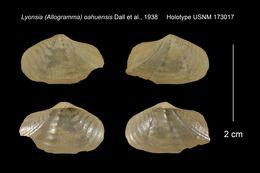 Image of <i>Lyonsia oahuensis</i> Dall