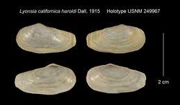 Image of <i>Lyonsia californica haroldi</i> Dall 1915
