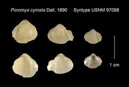 Image of <i>Poromya cymata</i> Dall 1890