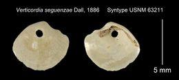 Image of <i>Verticordia seguenzae</i> Dall 1886