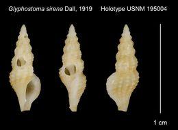 Image of <i>Glyphostoma sirena</i> Dall