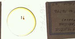 Image of <i>Xironogiton instabilis</i> (Moore 1894)