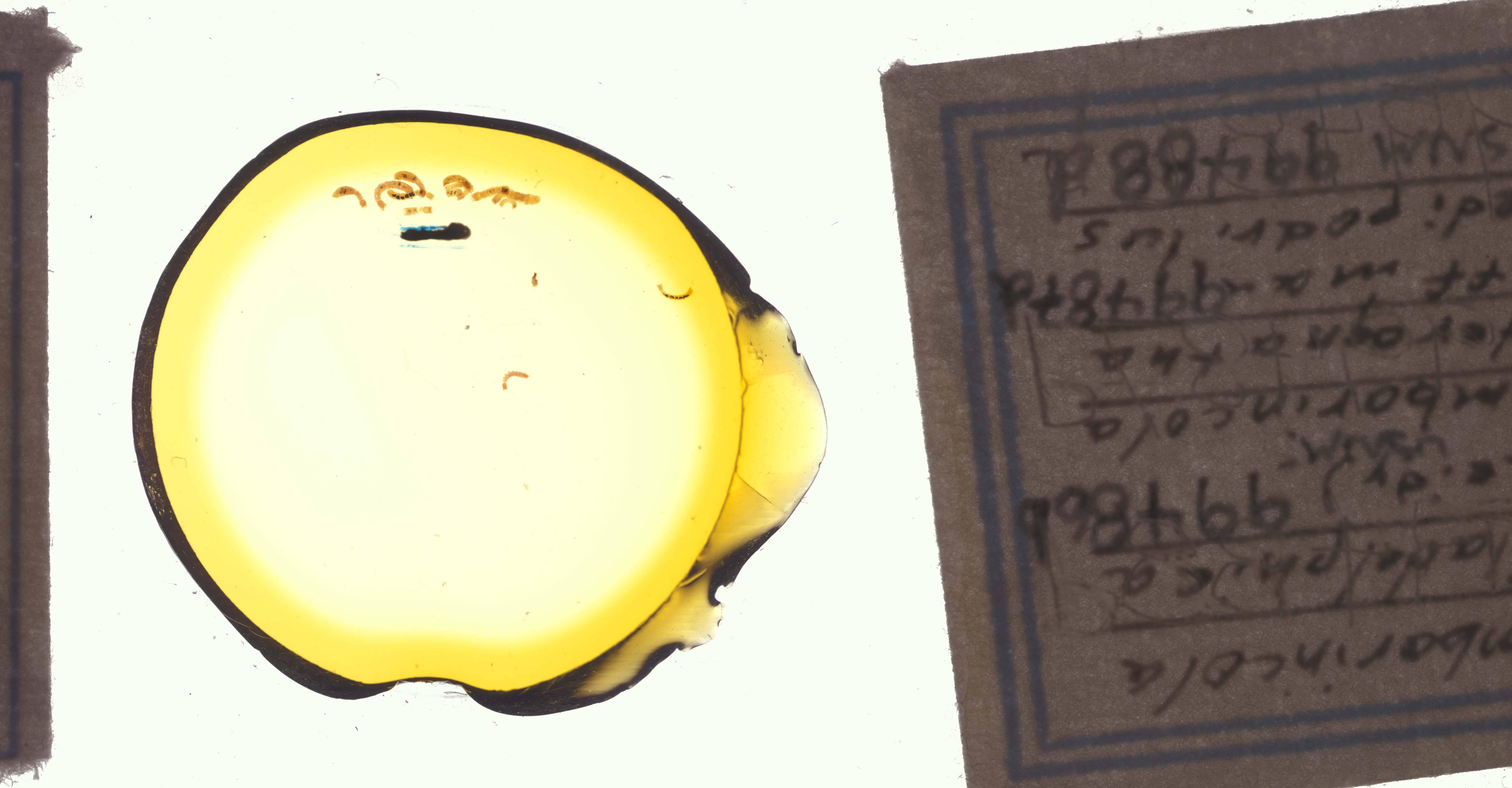 Image of <i>Cambarincola heterognathus</i> Hoffman 1963