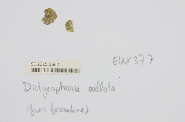 Image of <i>Dictyosphaeria ocellata</i> (M. A. Howe) Olsen-Stojkovich 1985