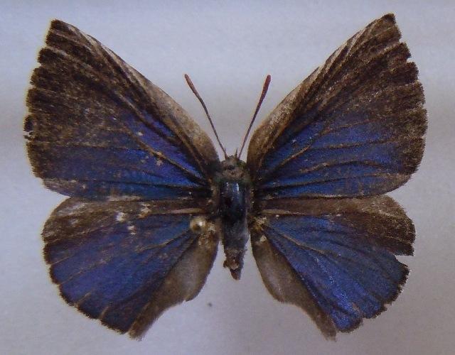 Image of Aslauga