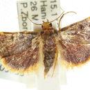 Image of <i>Hypsopygia mauritialis</i> Boisduval 1833