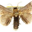 Image of <i>Mecytha dnophera</i>