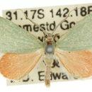 Image of <i>Idiochroa demissa</i> Turner 1922