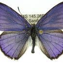 Image of <i>Candalides absimilis</i> (C. Felder 1862)