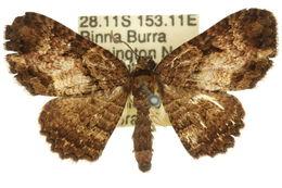 Image of <i>Scotocyma ischnophrica</i> Turner 1932