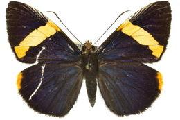 Image of <i>Chaetocneme porphyropis</i> Meyrick & Lower 1902