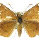 Image of <i>Exometoeca nycteris</i> Meyrick 1888