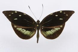 Image of Lieinix